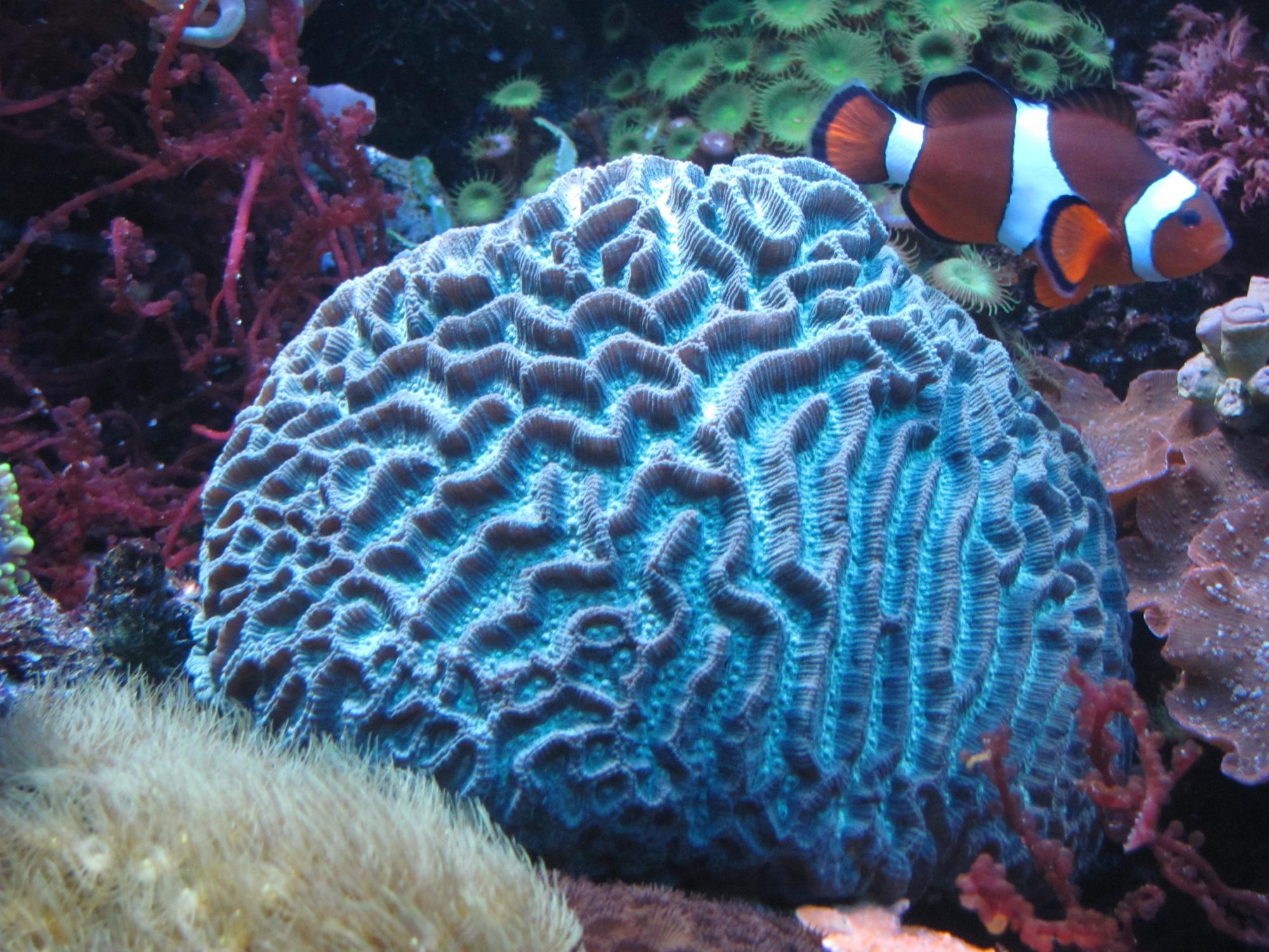 .....почти тонна рифа,800л рыбник..... Attachment