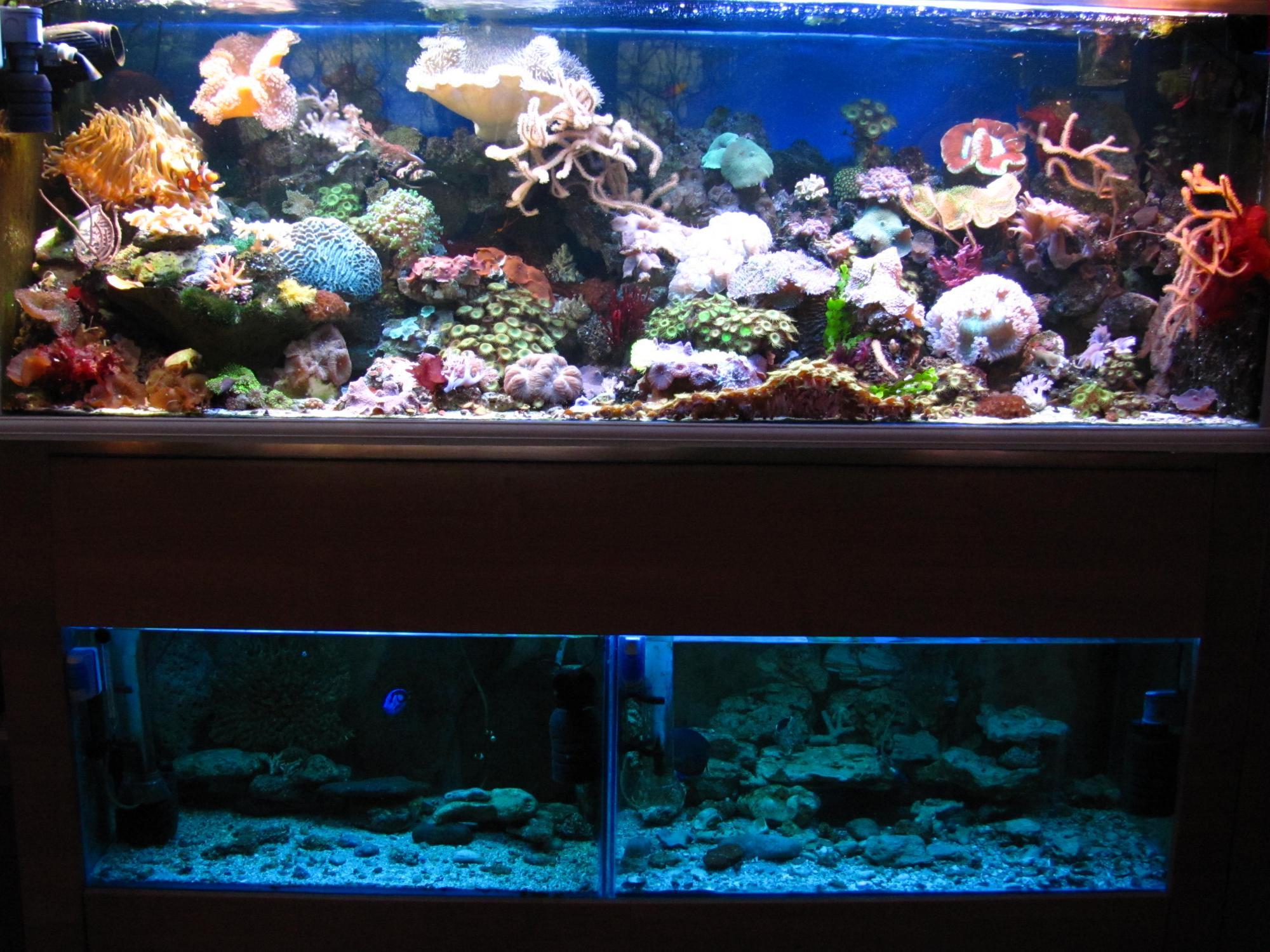 .....почти тонна рифа,800л рыбник..... - Страница 5 Attachment