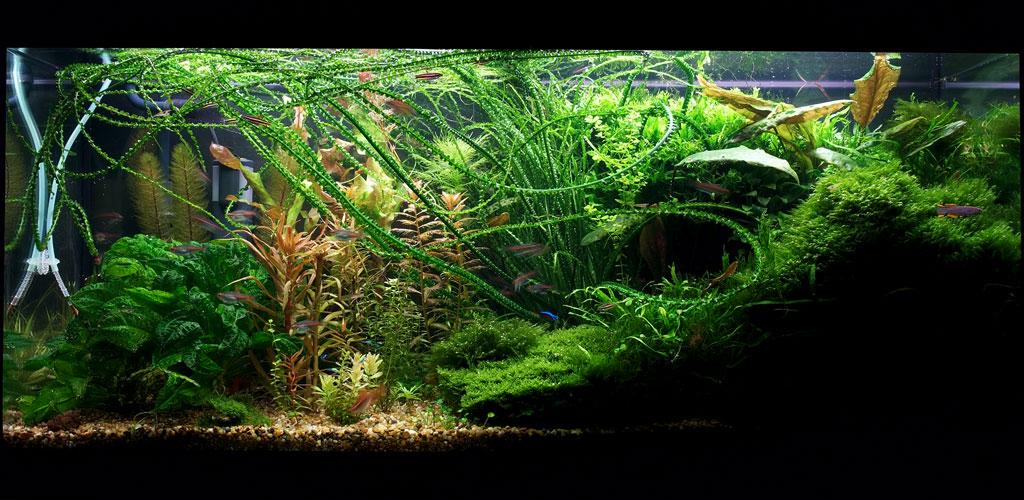 Калий в аквариум своими руками 508