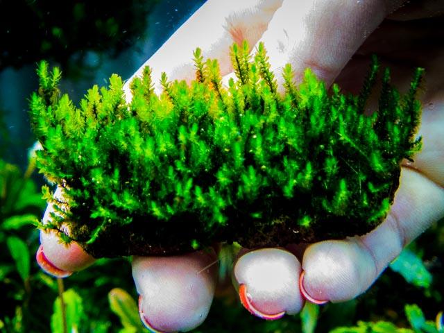 Картинки по запросу moss sp. gunung panti johor malaysia