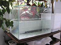 Промывка аквариума