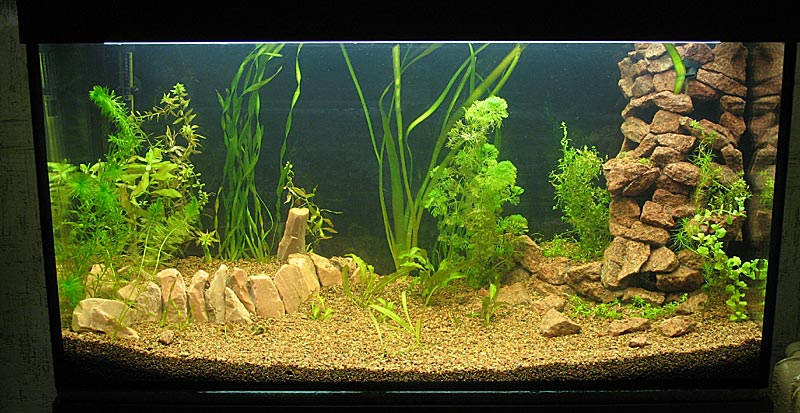 Как украсить свой аквариум своими руками