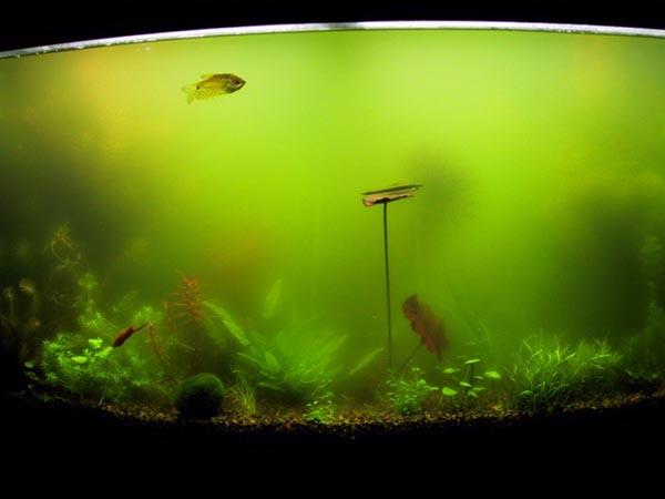 Стекла грунт растения в аквариуме