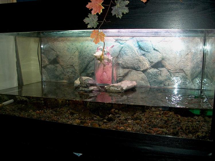 Террариум для болотной черепахи своими руками